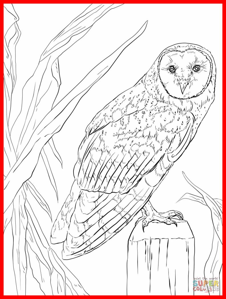 Realistic Owl Coloring Pages at GetColorings.com | Free printable ...