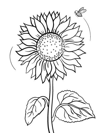 392x507 Printable Sunflower Coloring Page. Free Pdf Download