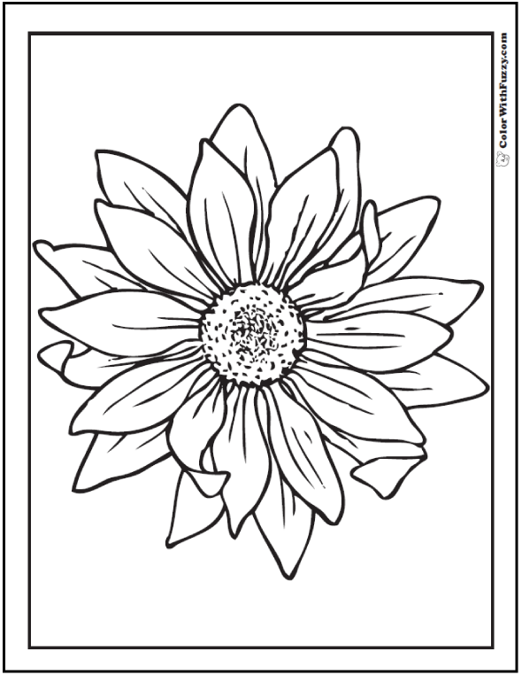 590x762 Sunflower Coloring Page Pdf Printables