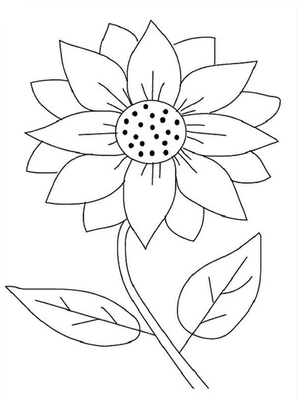 600x805 Sunflower Coloring Pages