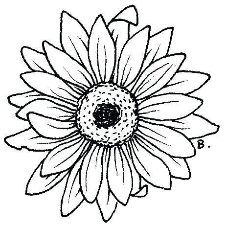 462x462 Sunflower Coloring Pages Sunflowers Coloring Pages Printable