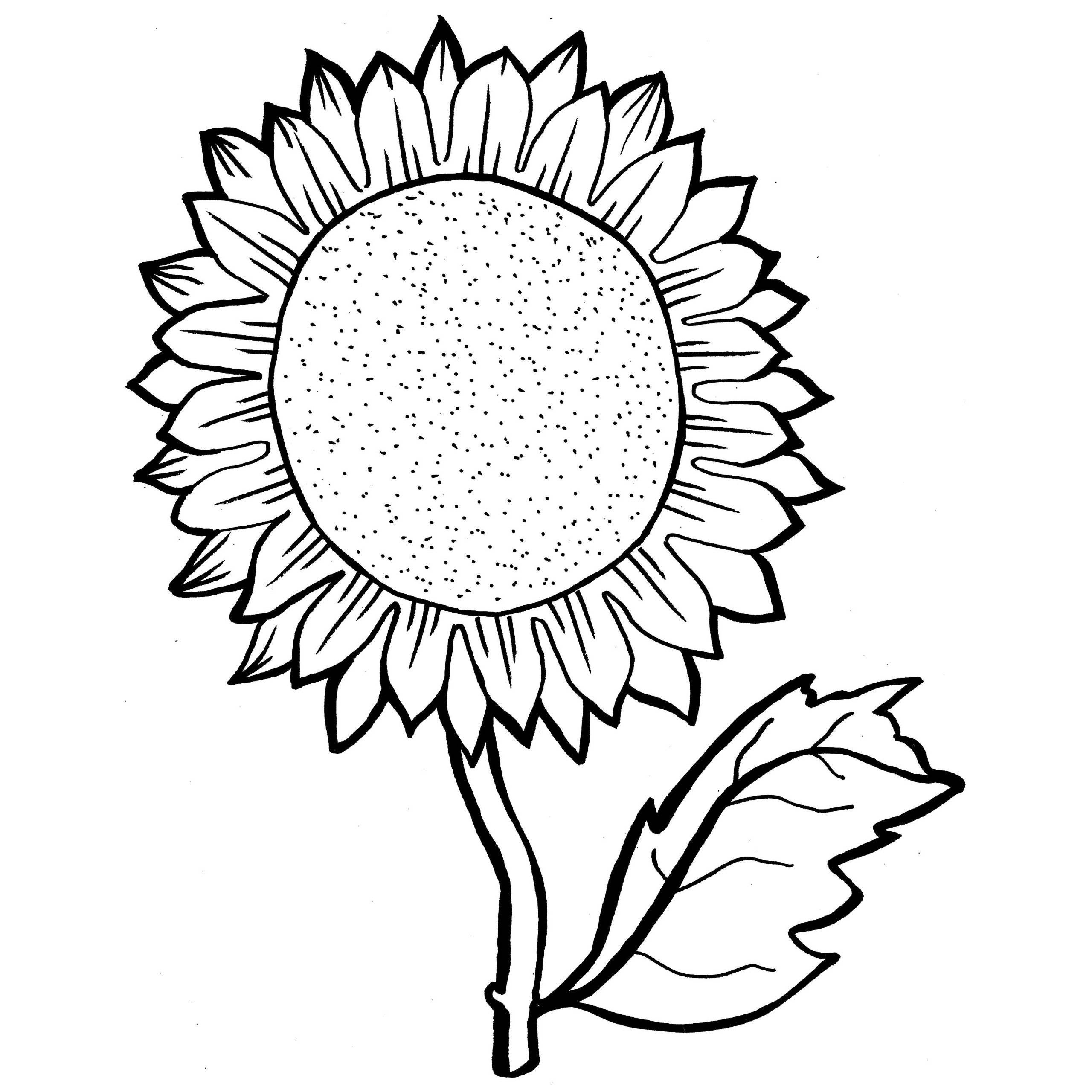 2560x2560 Sunflowers Coloring Pages Acpra
