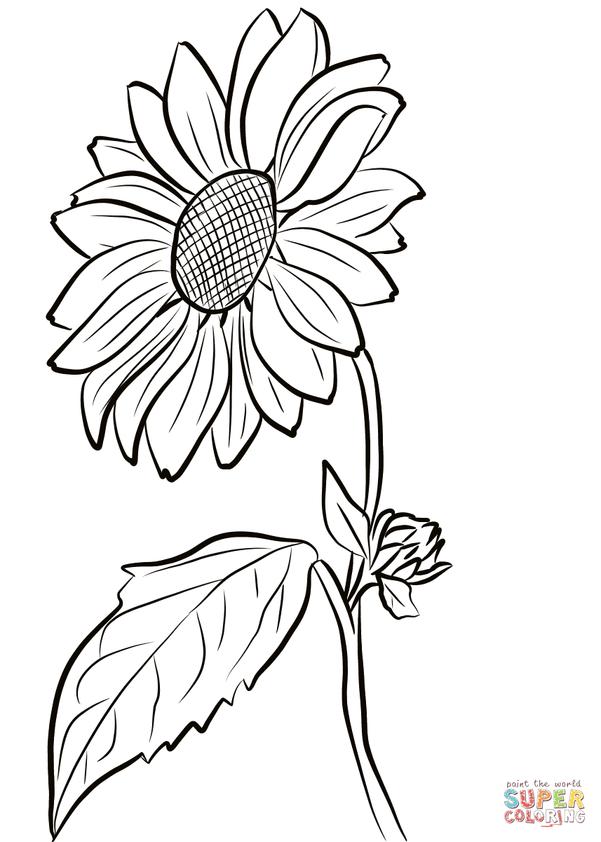 857x1200 Breakthrough Sunflower Colouring Pages Colorin 12552 Unknown