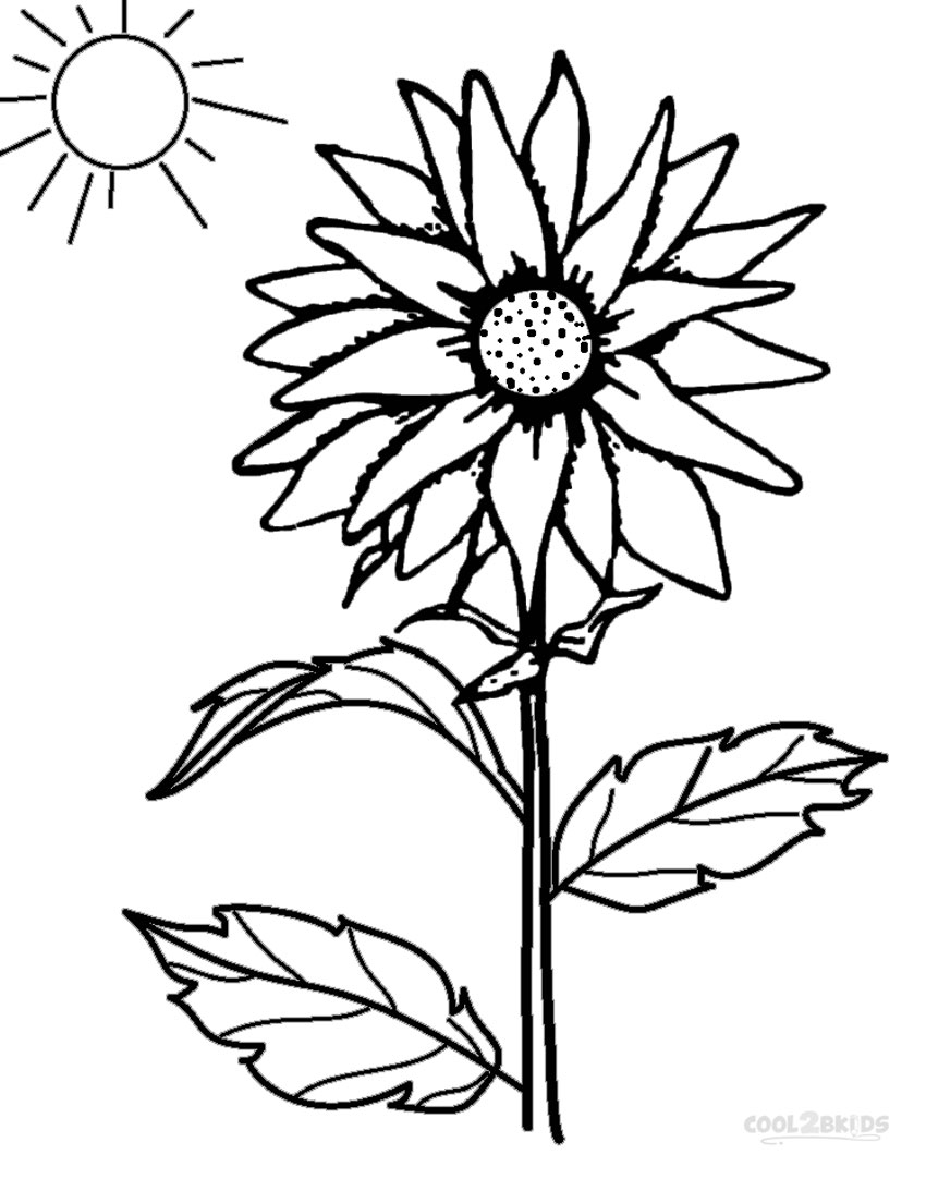 850x1082 Printable Sunflower Coloring Pages For Kids Cool2bkids Sunflower