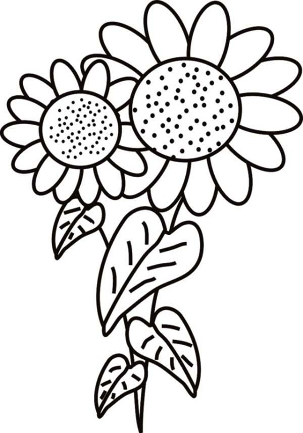600x858 Fancy Sunflower Coloring Page Fancy Sunflower Coloring Page
