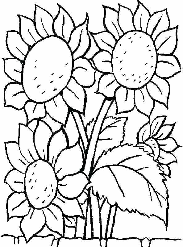 593x800 Free Printable Coloring Pages Sunflower Flowers For Kids Sunflower