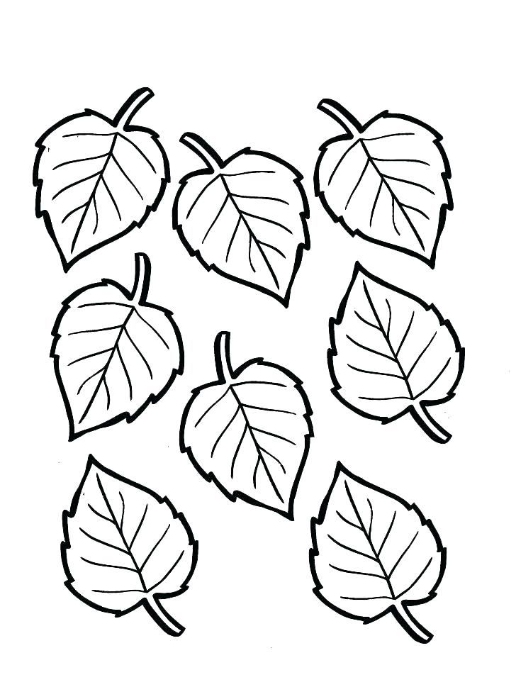 728x969 Leaf Coloring Page As Well As Leaf Coloring Page Coloring Pages