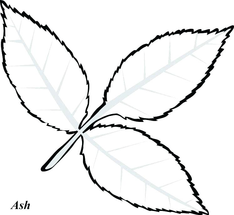 747x686 Leaf Coloring Page Leaf Templates Printable Palm Leaf Coloring