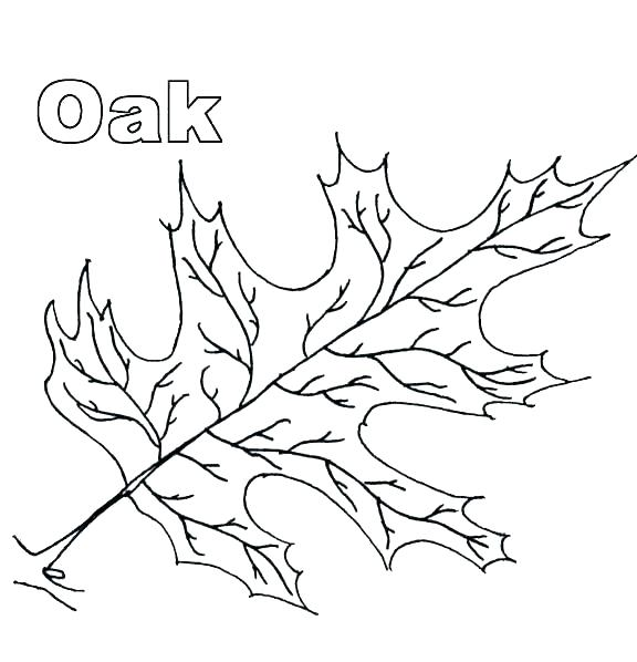 576x598 Leaf Coloring Pages Maple Page Thanksgiving Leaves Colorin