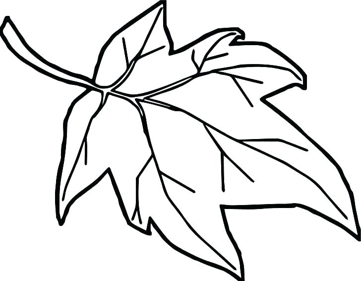 728x566 Leaves Coloring Page Orange Coloring Page Fall Leaf Coloring Page