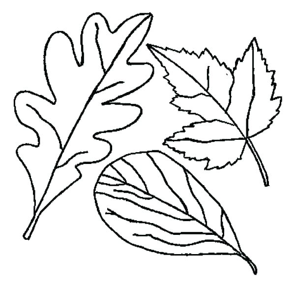 600x593 Thanksgiving Leaves Coloring Pages Coloring Page Leaf Thanksgiving