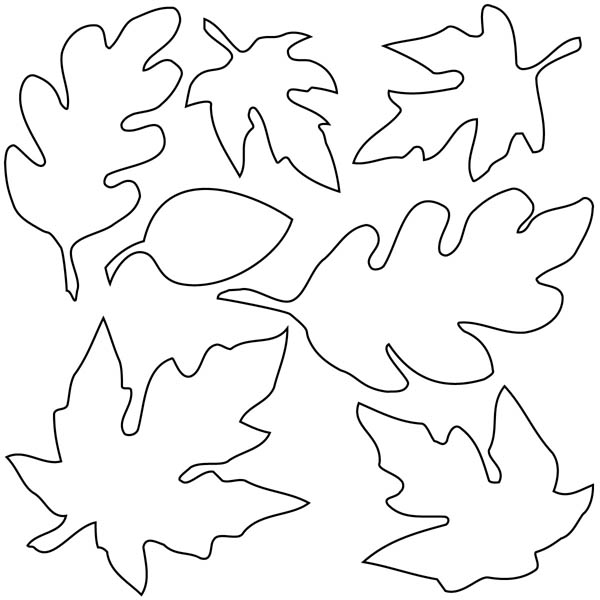 600x600 Various Type Of Maple Leaf Coloring Page Dolig