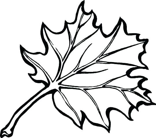 540x478 Coloring Pages Leaves Autumn Gallery Coloring Pages Leaves