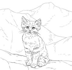 wild cats coloring pages print - photo#28