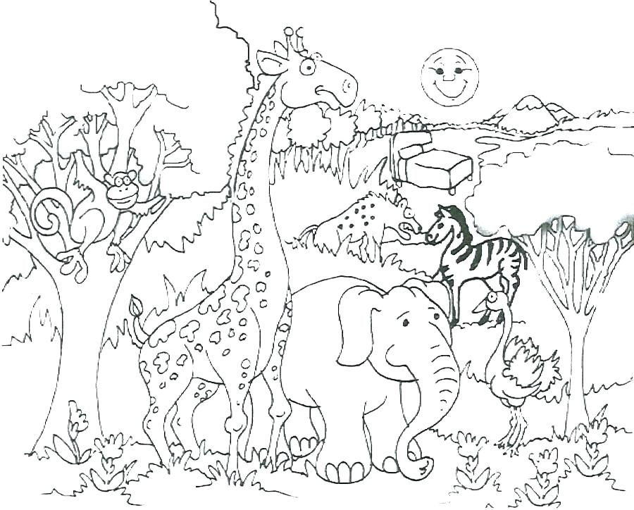900x724 Zoo Animals Coloring Page Coloring Pages For Animals Coloring
