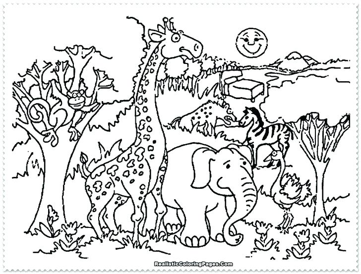 728x553 Zoo Coloring Sheet Zoo Coloring Sheet Zoo Coloring Pages Zoo